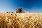 barley harvest, near Dugald,  Manitoba, Canada
